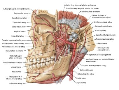 Pembuluh darah pada mandibula