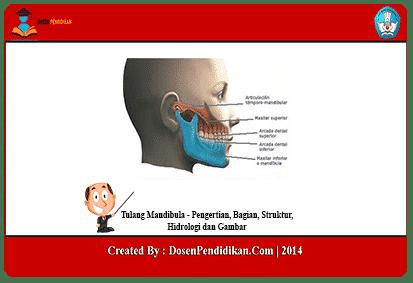 Tulang-Mandibula