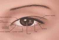 Bagian-Luar-Mata