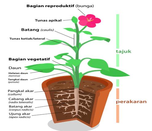 Bagian-bagian-Tumbuhan