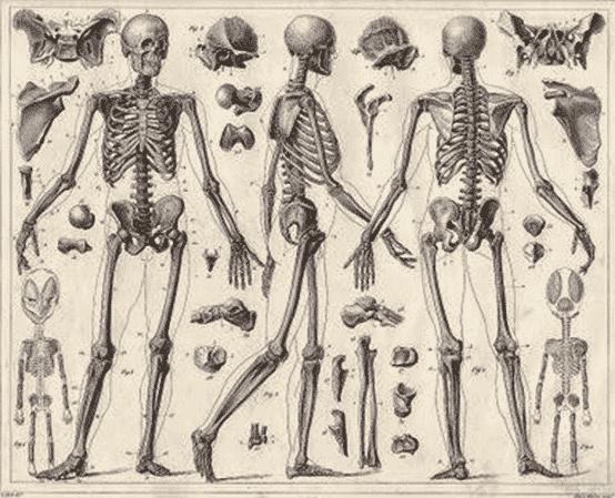 Bagian-bagian-yang-sering-terdapat-pada-tulang