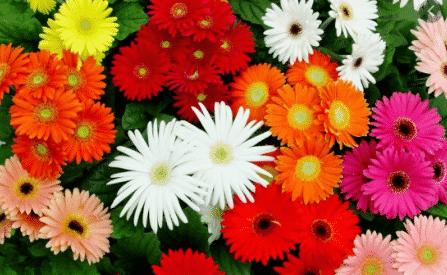 Macam-Bunga