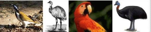 Burung-Penghisap-Madu
