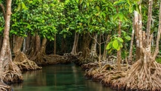 Conservasi-Hutan-bakau