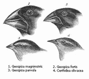 Contoh-adaptasi-morfologi