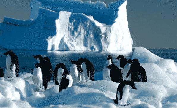 Flora-dan-Fauna-Benua-Antartika