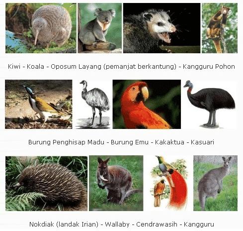 Flora-dan-Fauna-Benua-Australia