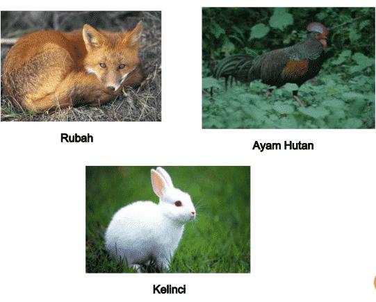Flora-dan-Fauna-Benua-Eropa