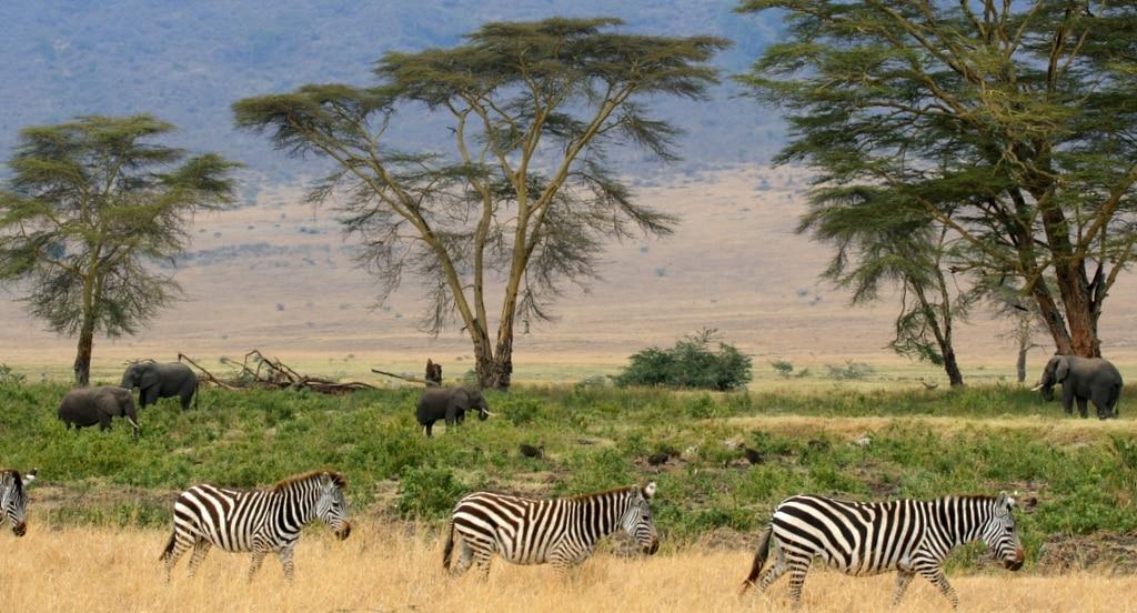 Flora-dan-Fauna-di-Afrika