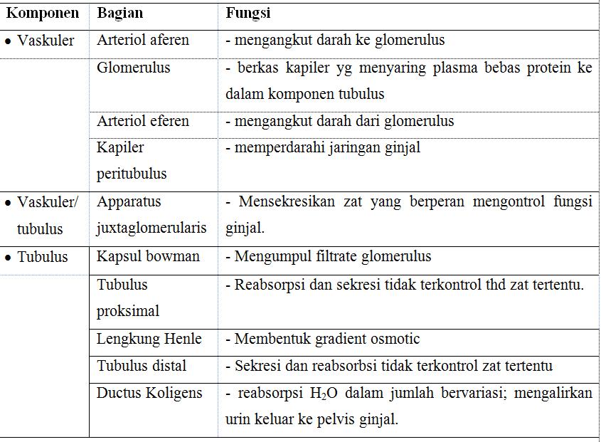 Fungsi-nefron
