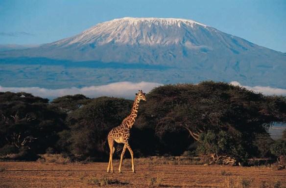 Gunung, Pegunungan dan Plato di Afrika