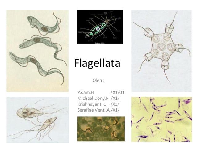 Habitat-Flagellata