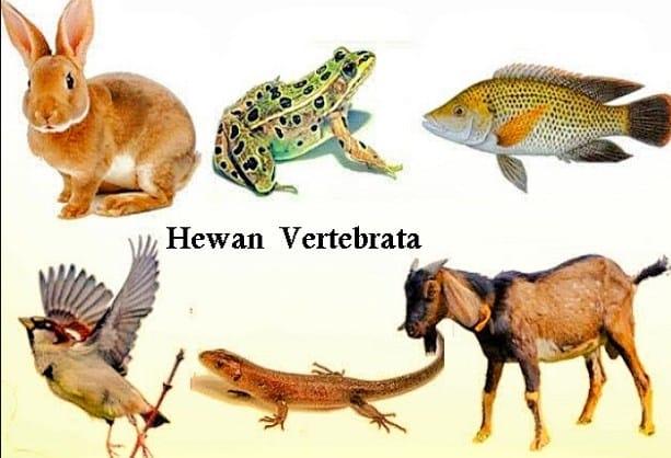Hewan-Vertebrata