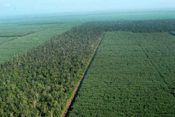 Hutan-Tanaman-Produksi