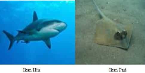 Ikan bertulang rawan