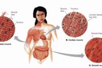 Jaringan-otot-pada-manusia