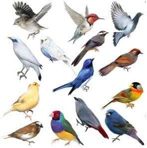 Jenis-Burung-Aves