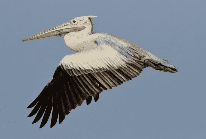 Karakteristik-Aves