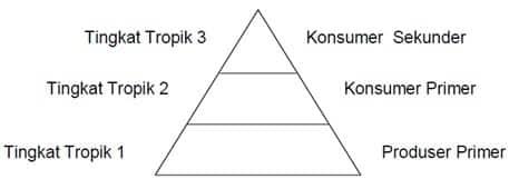 Piramida makanan yang menunjukkan tingkat tropis produser dan consumer