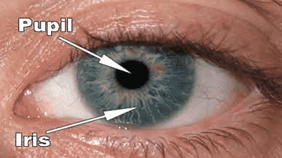 Pupil-dan-iris