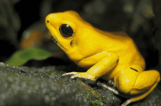 Rachoporidae