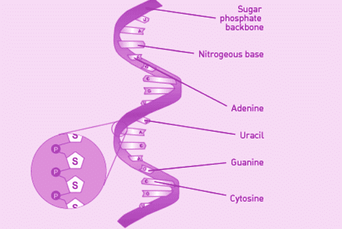 Struktur-RNA