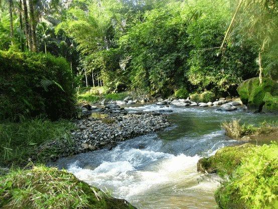 Ekosistem Perairan Pengertian Macam Ciri Dan Permasalahan