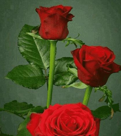 Macam Bunga Mawar Tulip Teratai Sepatu Kateliya Melati