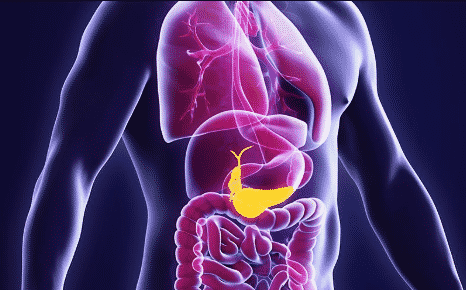letak-pankreas