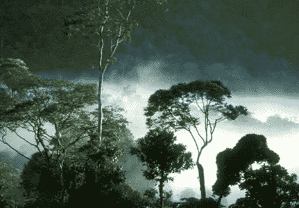 hutan tropika