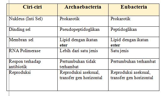 perbedaan eubacteria