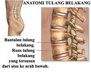 ruas-tulang-belakang