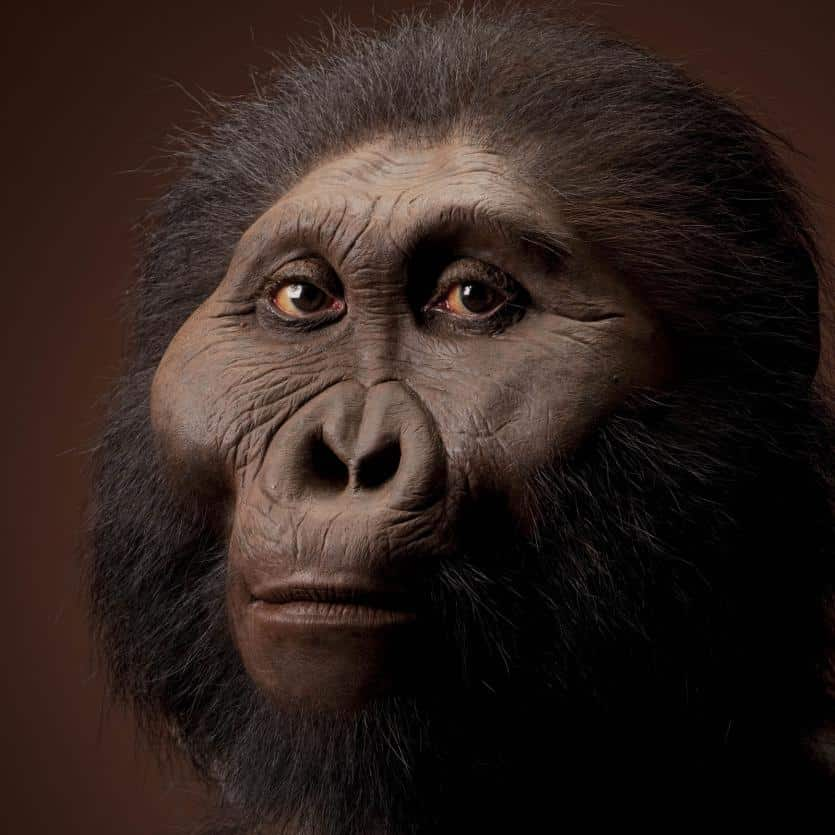 Australopithecus-Boisei