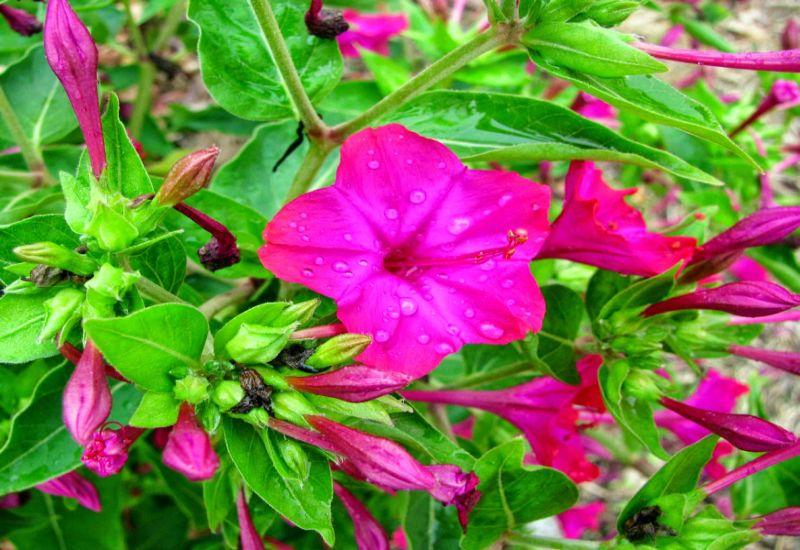 Bunga-Ashar