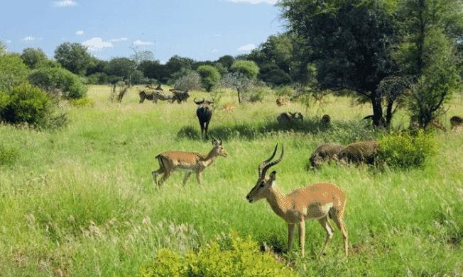 Hewan-dan-Lingkungan-Abiotik