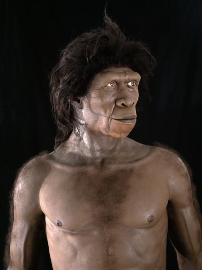 Homo-Ergaster