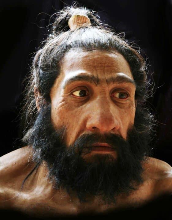 Homo-Neanderthal