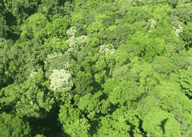 Hutan-Dataran-Rendah