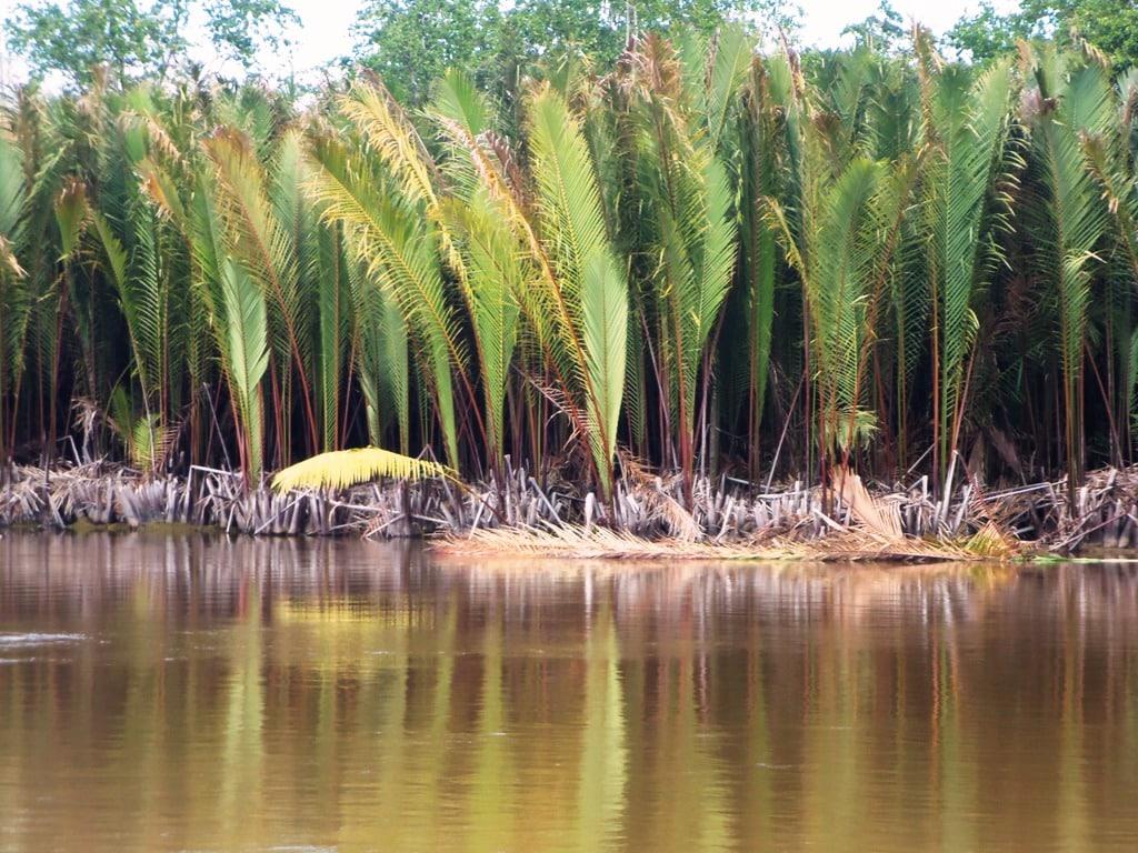 Hutan-Sagu