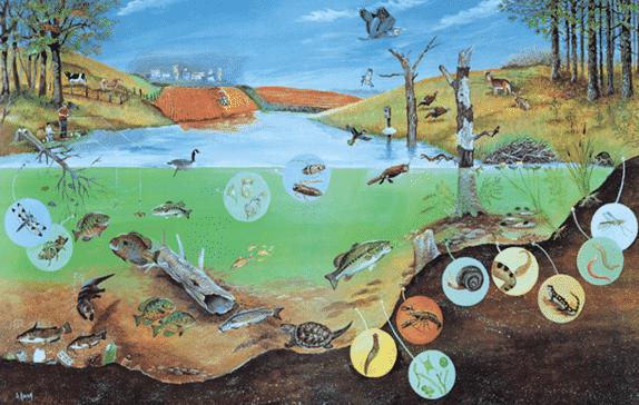 Kondisi-Ekologis-Danau