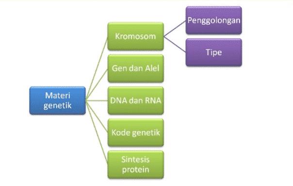 Konsep-Genetika