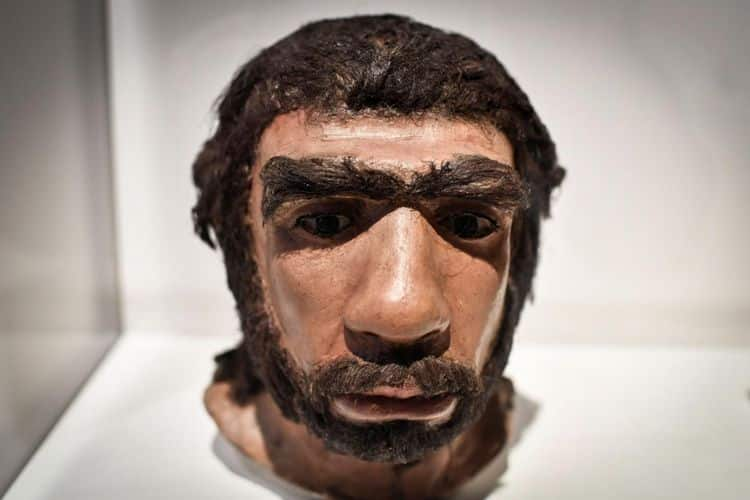 Manusia-Neanderthal