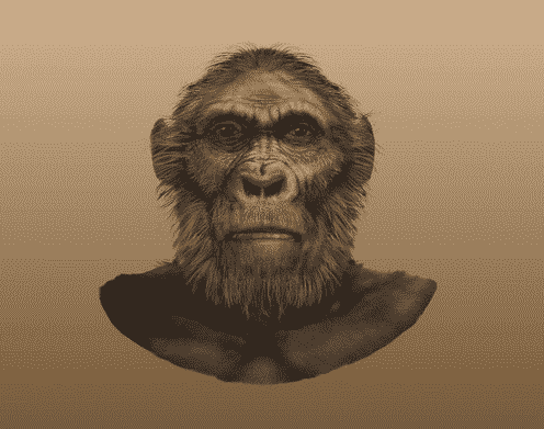 Paranthropus-Robustus