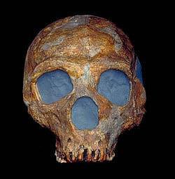 Shanidar-Fosil