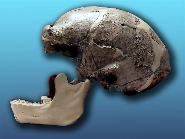 Sinanthropus-Pekinensis
