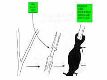 Teknik mencangkok tanaman