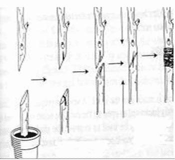Teknik sambung pucuk
