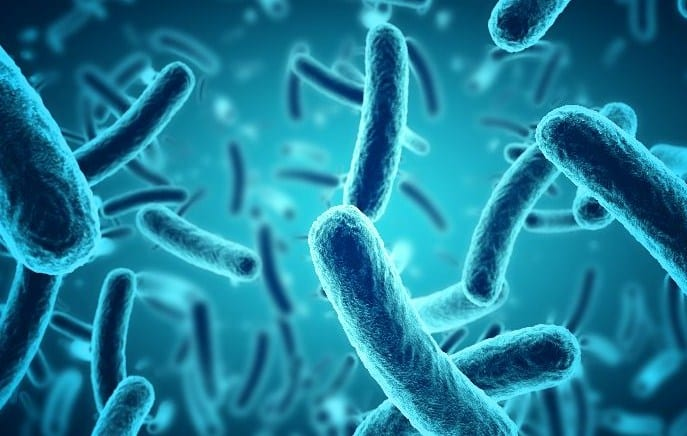 Bakteri-Adalah