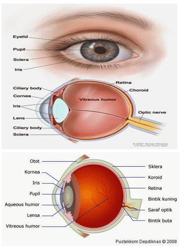 gambar anatomi mata
