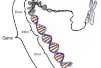 Pengertian Gen